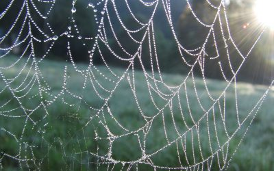 Technical Penguins Content Before Design: A photo of a spiderweb in a field, covered in drops of dew, highlights the idea that something can be both functional and beautiful.